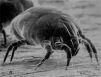 Anti House Dust Mite System image